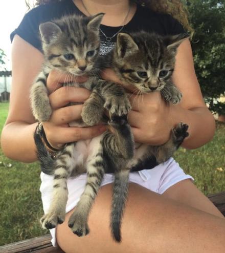 CARMAGNOLA - Gattini buttati come spazzatura in un cortile di via Oselle