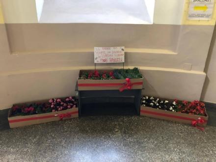 CARMAGNOLA - Il negozio di fiori regala 100 piantine alle mamme lavoratrici dellospedale San Lorenzo