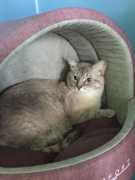 MONCALIERI - Vergognoso abbandono di una gatta con i cuccioli dentro un sacchetto di plastica