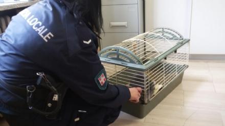 NICHELINO - Coniglietto stremato dal freddo abbandonato, salvato da una vigilessa fuori servizio