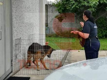 NICHELINO - Il cane scappa e si rifugia nel cortile di unazienda, tenendo in ostaggio i dipendenti