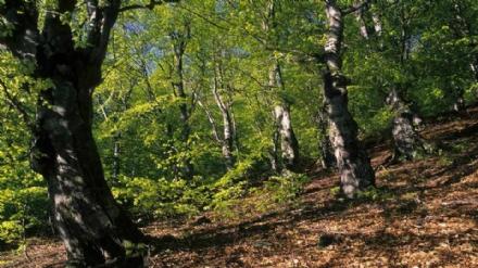 ORBASSANO - Nasce il bosco urbano per combattere linquinamento