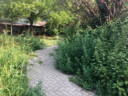 PIOSSASCO - Giardini di via Trento come una giungla: proteste dei residenti