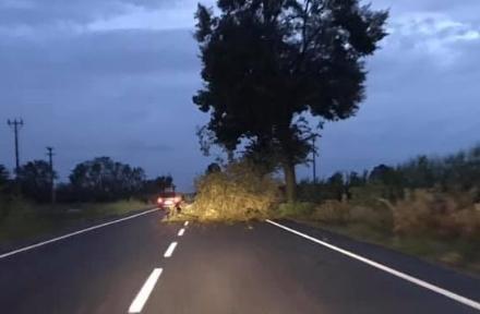 CARMAGNOLA - Il giorno dopo la tromba daria: la stabilità degli alberi torna dattualità
