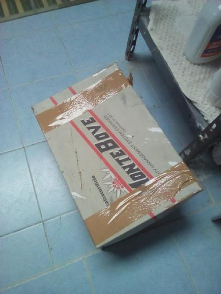 RIVALTA - Micino abbandonato in una scatola: recuperato dai volontari dellArca di Piera