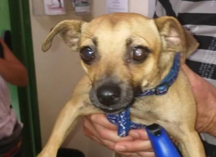 NICHELINO - Cagnolino terrorizzato salvato dagli agenti della polizia municipale