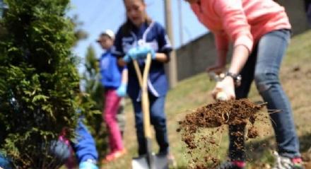 RIVALTA - La città aderisce alla campagna ambientalista #Unalberoinpiù