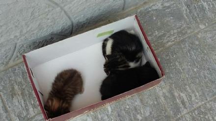 LA LOGGIA - Gattini appena nati cercano casa
