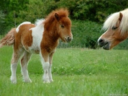VINOVO - Due pony scappano da La Loggia e vengono fermati e recuperati dai carabinieri