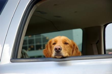 MONCALIERI - Lascia il cane chiuso in auto in strada Del Cervo: arrivano i carabinieri
