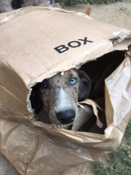 CARMAGNOLA - Criminali abbandonano nella notte cinque cagnolini negli scatoloni - LE FOTO -