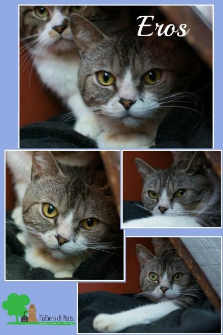 Il gattino Eros, dopo essere stato abbandonato senza cibo e acqua, cerca casa