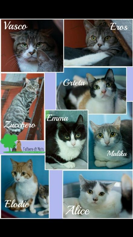 MONCALIERI - Salvati 14 gattini abbandonati nella sporcizia e denutriti