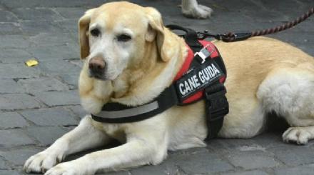 PIOSSASCO - Idiota avvelena il cane guida di un ragazzo non vedente