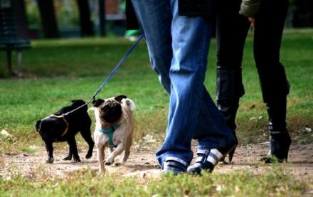 CARMAGNOLA - Festa dei cani ospitati in canile per cercare un nuovo padrone