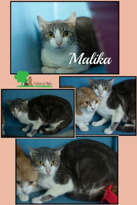 ANIMALI - Malika dopo linferno ha bisogno di una casa e tanto amore