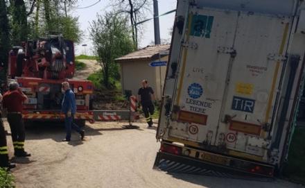 CARMAGNOLA - Camion carico di vitellini finisce fuori strada - FOTO