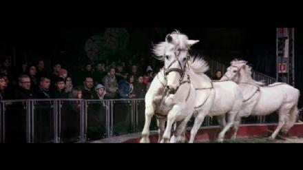 CARMAGNOLA - Fioccano le polemiche per larrivo del circo con gli animali