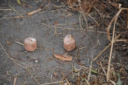 RIVALTA - Allarme esche killer per cani: quattro bocconi chiodati ritrovati in via Adamello