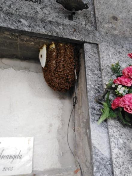 RIVALTA - Le api fanno lalveare al cimitero e qualcuno tenta di incendiarlo