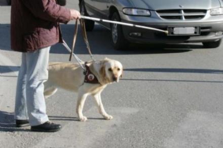 PIOSSASCO - Non vedente con il cane guida colpito da unauto mentre attraversa la strada