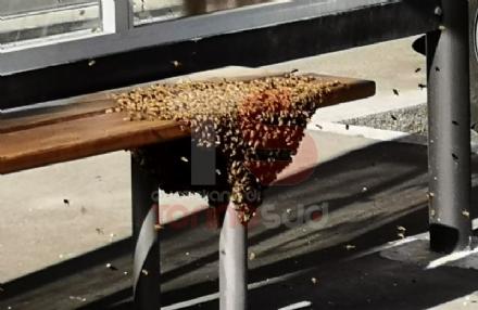NICHELINO - Uno sciame di api invade la fermata del bus: passeggeri in fuga per evitare punture - FOTO