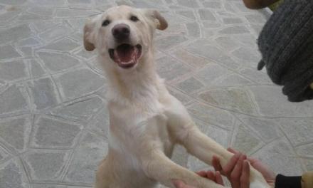 NICHELINO - Trenta cani recuperati nel 2017 sul territorio