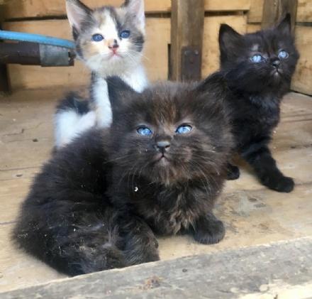 CANDIOLO - Troppe colonie feline: paese invaso dai gattini