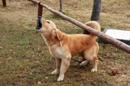 VINOVO - Cercano di rubargli il cane mentre passeggia in via Cottolengo