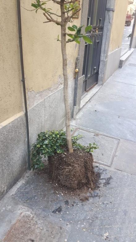 MONCALIERI - Vandali in centro storico rubano i vasi ma lasciano le piante