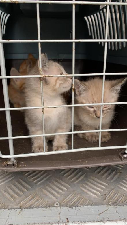 LA LOGGIA - Gattini e un cagnolino abbandonati a bordo strada