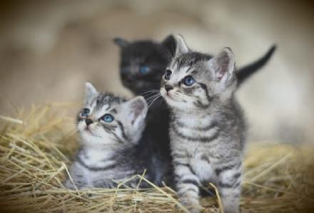 LA LOGGIA - Sparano ai gatti del Belvedere: la polizia locale avvia i controlli