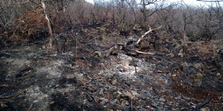SANGANO - Il giorno dopo lincendio resta la rabbia per la porzione di bosco che non cè più