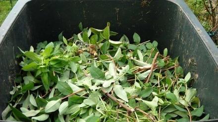 RIFIUTI - La Regione riapre i centri di conferimento per i rifiuti vegetali
