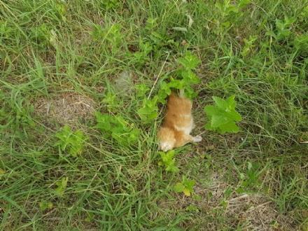 CANDIOLO - Giallo per il ritrovamento di tre gattini uccisi in via Orbassano