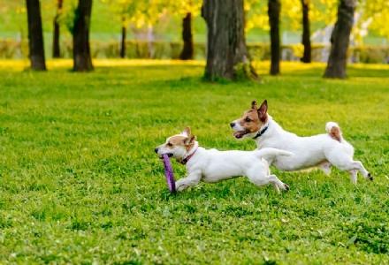 NICHELINO - Via alle manutenzioni delle aree cani: a breve una App per le segnalazioni