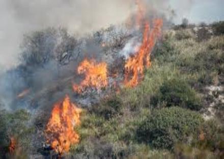 REGIONE - Scatta lallarme incendi. Multe fino a 2000 euro per chi butta la sigaretta accesa in aree boschive