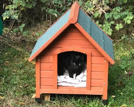 PIOSSASCO - Ladri idioti senza cuore: rubata la casetta dei gatti sfortunati donata ai volontari