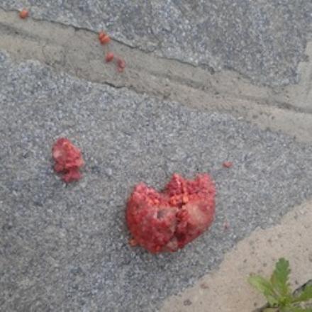 LA LOGGIA - Le avvelenano il cane in giardino con del topicida