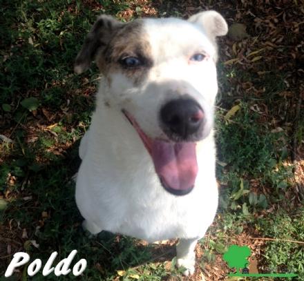 ANIMALI - Poldo è un cane che da dieci anni aspetta la famiglia che lo coccoli