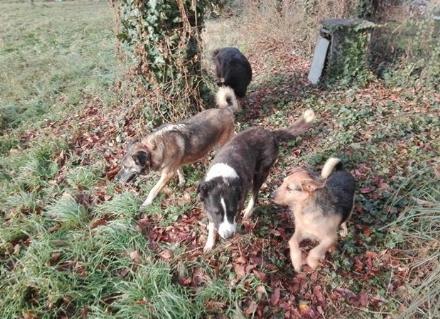 CARMAGNOLA - Riparte il piano della mappatura del dna dei cani contro le deiezioni