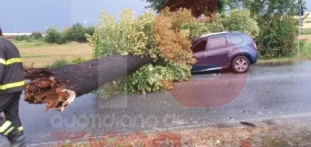 CARMAGNOLA - Crolla una pianta e colpisce unauto in transito: tragedia sfiorata in via Sommariva