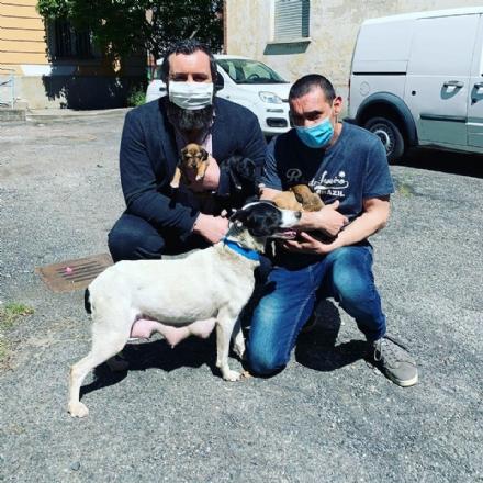 NICHELINO - La cagnolina fuggiva da mesi: trovata assieme a quattro cuccioli appena nati