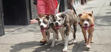 MONCALIERI - Aree cani sporche, lassociazione dona scopa e paletta dopo aver ripulito