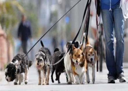 NICHELINO - Il Comune cerca volontari per portare fuori i cani dei padroni in quarantena