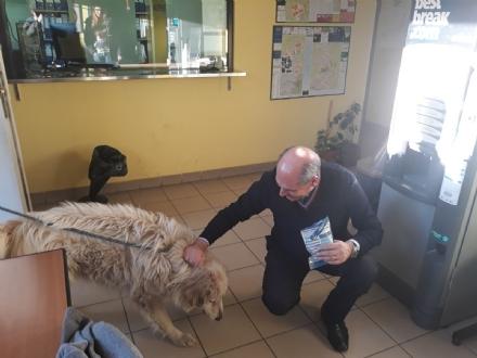 RIVALTA - La polizia municipale prende i croccantini per i cani abbandonati
