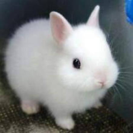 MONCALIERI - Abbandonano un coniglietto nel trasportino in unarea cani: salvato