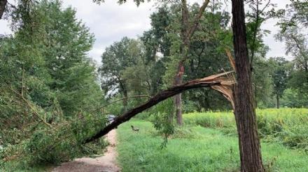 NICHELINO - Crollano gli alberi per il maltempo: chiuso il parco Boschetto