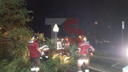TROFARELLO-CARMAGNOLA - Alberi abbattuti, strade e cantine allagate: nottata di super lavoro per i vigili del fuoco - FOTO