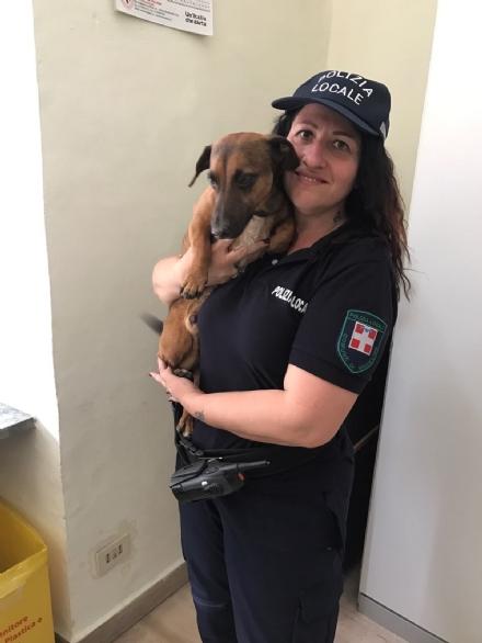 NICHELINO - La polizia municipale salva un cagnolino in via Torino